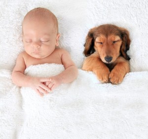 39381033 - sleeping newborn baby alongside a dachshund puppy.